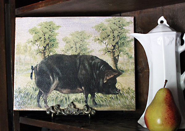 Black Pig Canvas